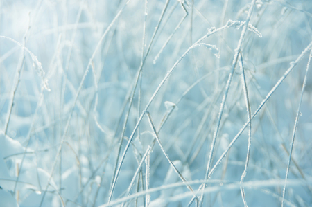 abstract winter background (out-of-focus frost field) photo