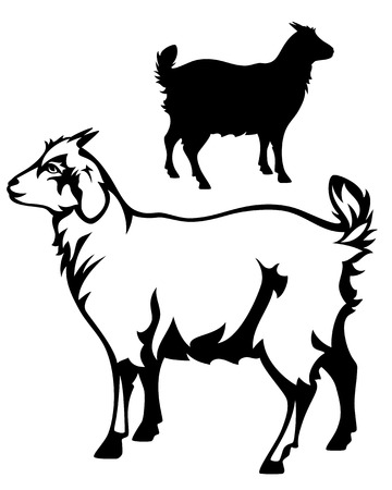 cute goat black and white outline and  detailed silhouette Vector