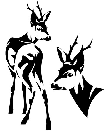 elegant roe deer Capreolus capreolus black and white vector outline - standing animal and head design