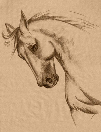 freehand horse head sepia toned pencil drawing - realistic animal sketch photo