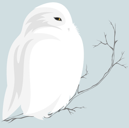 arctic: cute snowy owl sitting on branch - wildlife in the north