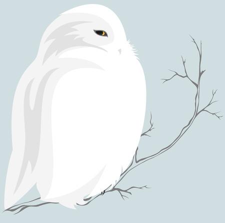 leuke sneeuwuil zittend op tak - wild in het noorden