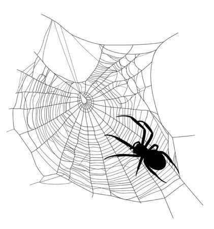 spider on the web - black insect silhouette crawling the net on white background Vector