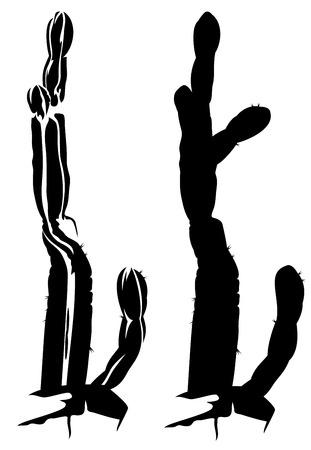 saguaro:  saguaro cactus outline and silhouette - black and white realistic design element