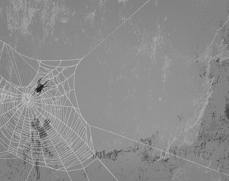 spidery: spider web silhouette on concrete wall - halloween theme spooky background with place for your text