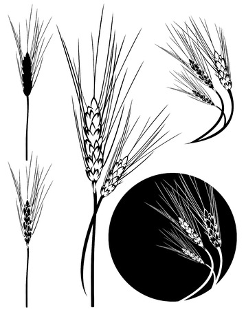 wheat grass: wheat ear black and white design - cereal stems collection