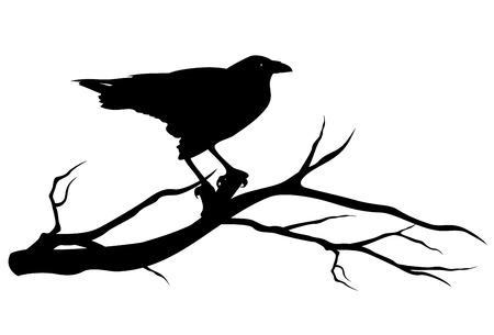 cuervo: pájaro cuervo en rama de un árbol - vector de la silueta en negro sobre blanco