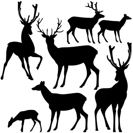 deer buck: deer black and white silhouette set - vector collection of wild animals detailed outlines Illustration