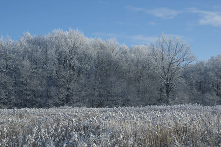 non urban scene: winter season landscape - field and forest covered with snow Stock Photo