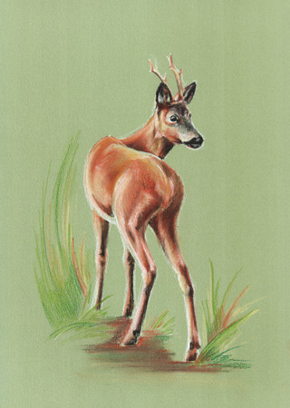 roe deer: roe deer on green - pastel drawn portrait with detailed paper texture