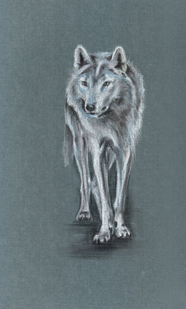 tundra: standing tundra wolf drawing on grey - pastel drawn animal with detailed paper texture