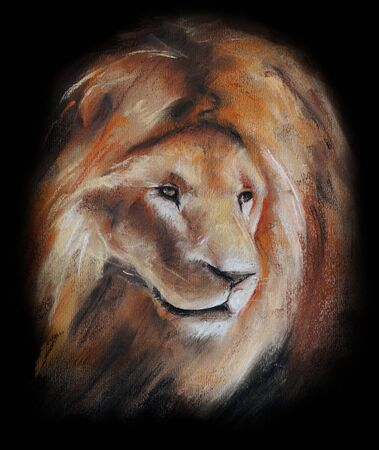 head paper: lion head drawing on black - pastel drawn animal with detailed paper texture