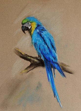 cotorra: loro sentado en la rama de árbol - pájaro dibujado en colores pastel con textura de papel detallada