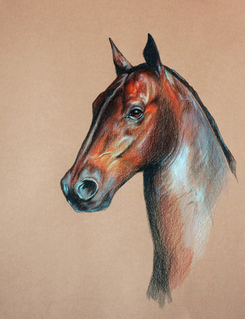 horse head: bay horse head - pastel drawn animal with detailed paper texture