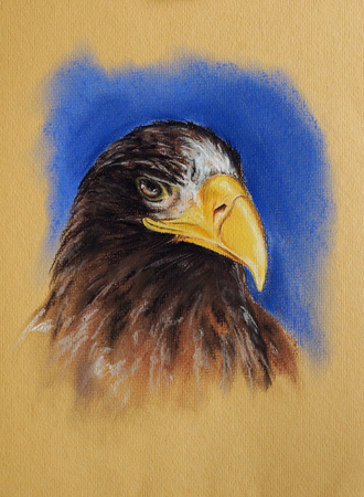 sea eagle: Stellers sea eagle portrait - pastel drawn bird with detailed paper texture Stock Photo