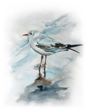 colorful paint: Seagull on the beach - watercolor painting of bird with detailed paper texture