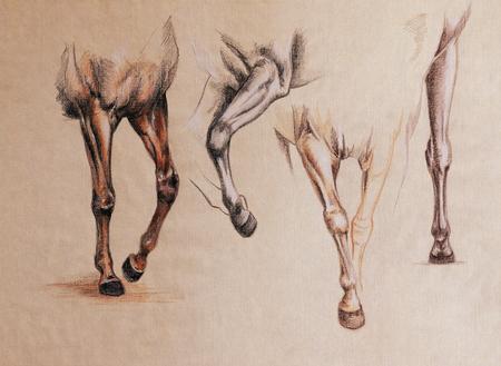 Pferd Die Vorderbeine In Bewegung - Jahrgang Suchen Anatomie Skizze ...