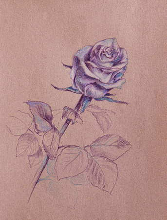 long stem roses: rose flower in shades of purple and blue - hand drawn pastel sketch on toned brown paper