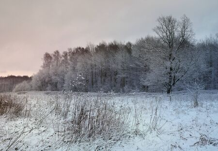 snow field: winter evening landscape with tree and snow covered field