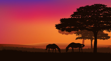 trees silhouette: pair of horses grazing at sunset under trees - rural evening landscape