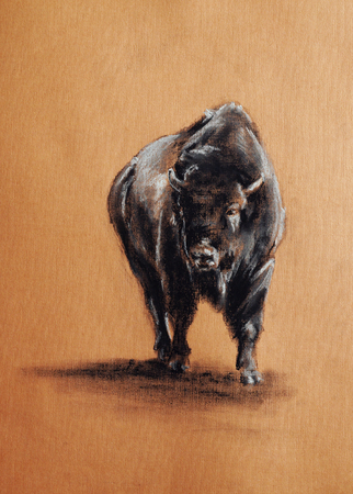 american bison: standing bison - pastel drawn animal with detailed paper texture