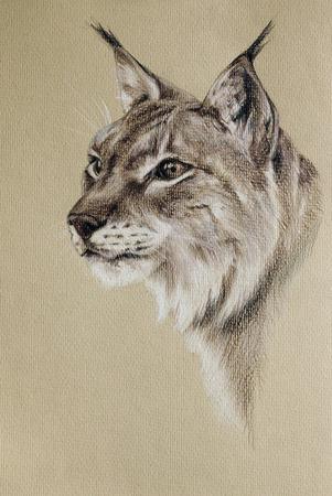 lynx: wild lynx  pastel drawn portrait with detailed paper texture Stock Photo