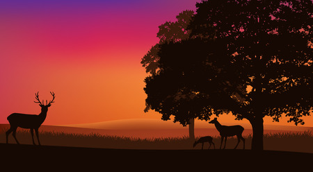 deer family grazing at sunset under trees - rural evening landscape