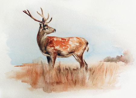 Cervi nel campo - pittura acquerello pittura con texture di carta dettagliata Archivio Fotografico - 82502549