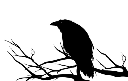 Ominous raven sitting on a bare tree branch - black crow bird Halloween theme