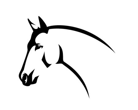 Horse head side view - elegant thoroughbred stallion black and white  profile portrait
