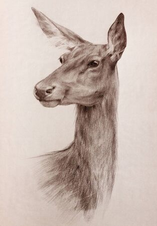 elegant watchful deer head portrait - graphite pencil sepia toned hand drawing on textured paper