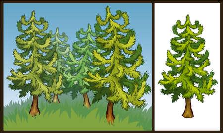 firtree: Vector illustration of green fir-tree on transparent background and landscape Illustration