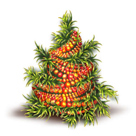 Vector illustration of Christmas fir-tree on white background. Vector