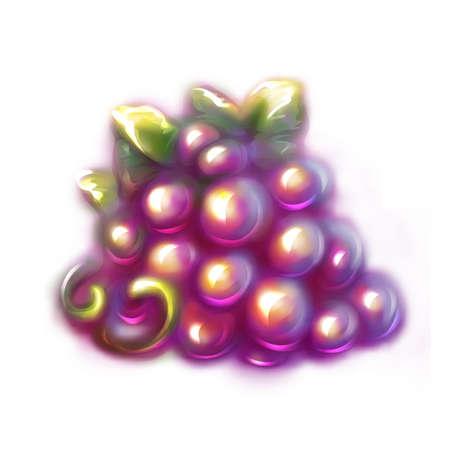 black grape: Vector illustration of black grape on white background