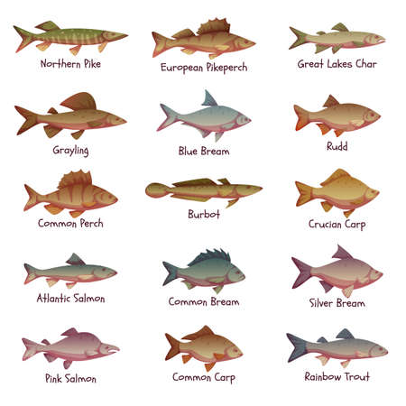 char: Vector set of most popular freshwater fishes.