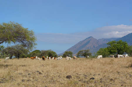 The savanna is dominated by dry grass and a few trees that spread wide with mountain and canyon background, it can be seen that some savanna inhabitants are looking for food.