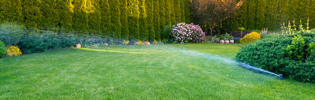 Irrigation of the green grass with sprinkler system.