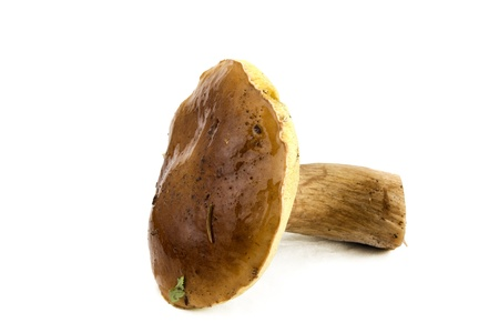 cep: Cep, mushroom, fresh