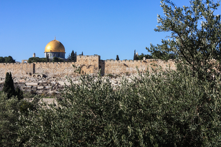 Gethsemane olive trees and the walls of Jerusalem photo