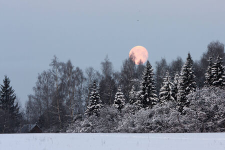 Winter landscape with a full moon - twilight in the forest before sunrise photo