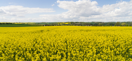Rape field under blue clouds sky with wind power stations photo