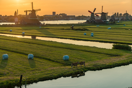 Mills at sunset in Netherlands