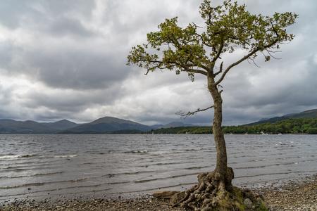 Lonley tree loch lomond scotland