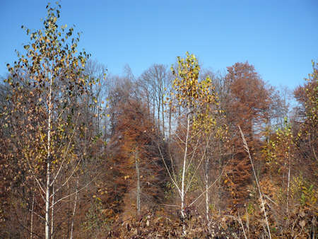 nature lover  autumn the mast beautiful autumn season Stock Photo - 14006610