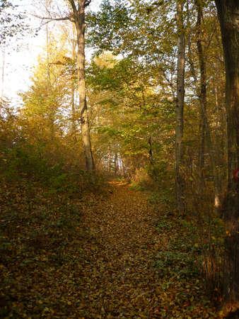 autumn of nature Stock Photo - 11126305