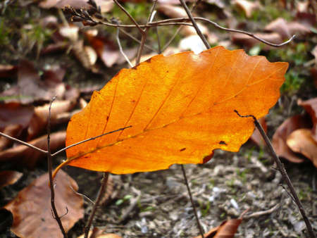 this is  autumn leaves and macro photography