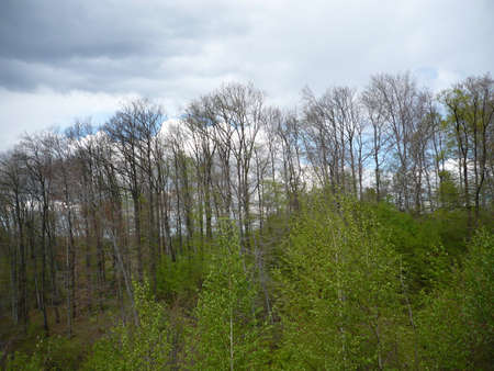 gloomy clouds over a clear sky on a nature walk Stock Photo - 13269467