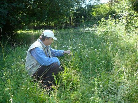 herbolaria: hierbas herbalist.medical en nature.now es el momento de recoger las hierbas y se sec� a tener que beber t� Editorial