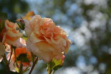 macro flowers: macro  flowers