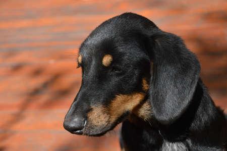 Portrait of abandoned black dog
